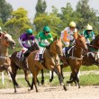 Horse racing. — Stock Photo #11829892