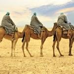 Camel caravan in desert, Sahara, Tunisia — Stock Photo