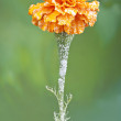The  ice crystals on the flower, the first autumn frost — Stock Photo