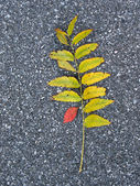 Leaves on asphalt — Stock Photo