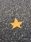 Leaf on asphalt — Stock Photo