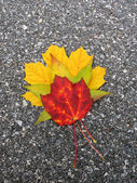 Leaves in fall — Stock Photo