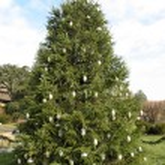 Christmas tree — Stock Photo #11621328