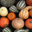 Pumpkins and gourds — Stock Photo #11971894