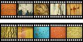 Bande de film avec des textures naturelles anciennes — Photo