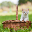 Two little cats in wicker basket — Stock Photo
