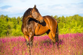 Bay horse portrait in pink flowers — Stock Photo