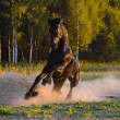 Black horse runs gallop in the sunset - Lizenzfreies Foto