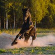 Black horse runs gallop in the sunset - Stockfoto