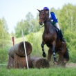 Cross-country. Disobedience (zakidka) horse - Stock Photo