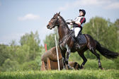 Cross-country fence. Disobedience horse — Stock Photo