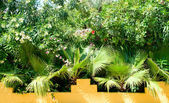 Tropical plants and palms — Stock Photo