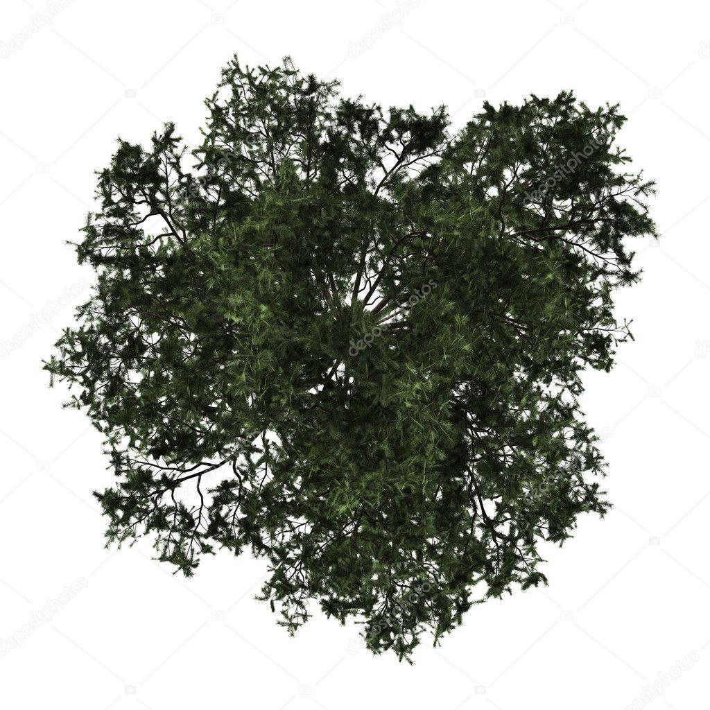 top pin tree of - photo #15