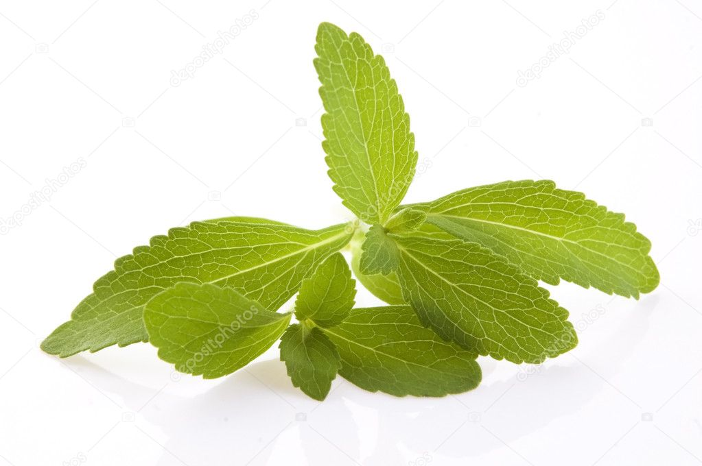 Stevia Rebaudiana leafs isolated on white background  Stock Photo #11914182