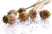 Poppy seeds and poppy heads — Stock Photo