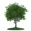 Tree with grass — Stock Photo