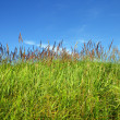 Stock Photo: Field of green fresh grass