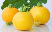 Yellow round fresh zucchini — Stock Photo