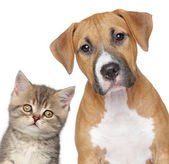 Kitten and puppy. Close up portrait — Stockfoto