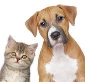 Kitten und welpen. nahaufnahme portrait — Stockfoto