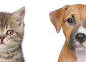 Kitten and puppy. Half of muzzle close up portrait — Stock Photo