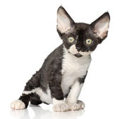 Devon-Rex kitten on white background — Zdjęcie stockowe
