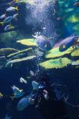 Dalgıçların su — Stok fotoğraf
