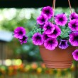 Purple flowerpot — Stock Photo