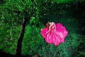Kobieta w sukni długo różowy — Zdjęcie stockowe