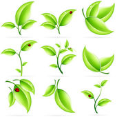 Fresh Green Leaves Icon Set — Stock Vector