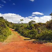 """Red earth, Park """" Black river Gorge """". Mauritius — Stock Photo"""
