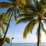 Hammock between palm trees — Stock Photo