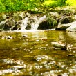 Forest river spring day - Stock Photo