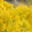 Abstract yellow flowers on field — Stock Photo