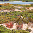 Blooming succulent plants in Island of Lobos, Fuerteventura, Can - Stock Photo
