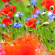 Poppies and cornflowers — Stock Photo