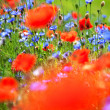 Stock Photo: Abstract wild meadow