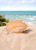 Shell on the beach — Stock Photo