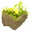 Grass in dirt — Stock Photo