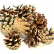 Pine cones — Stock Photo #11088789