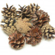 Pine cones — Stock Photo #11186231