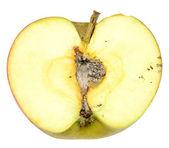 Rotten apple — Stock Photo