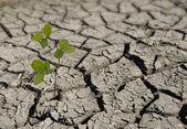Sapling growing from arid land — Stock Photo