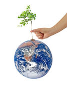 Tree on Earth as a symbol of pease and feeding the world.Element — Stock Photo