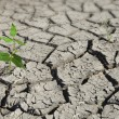 Stock Photo: Plant growing from arid land