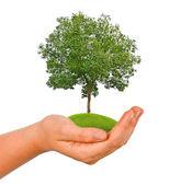 Tree in hand — Stock Photo