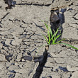 Stock Photo: Grass growing from arid land