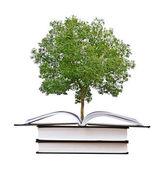Baum wächst aus offenes buch — Stockfoto