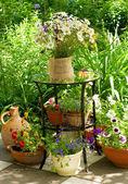 Bunch of daisy flowers — Stock Photo