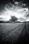 Abstract tree — Stock Photo